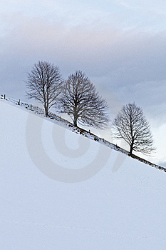 Three Trees Stock Images - Image: 16021694