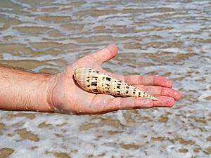 A Hand Holding A Seashell Stock Images - Image: 16026554