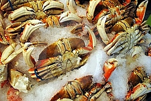 Dungeness Crabs Royalty Free Stock Image - Image: 16031906