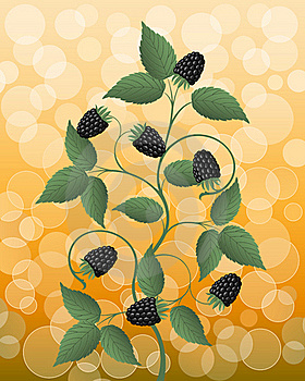 Floral Background With A Blackberry Stock Photos - Image: 16032873