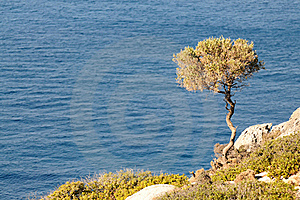 The Lonely Tree Stock Photography - Image: 16034912
