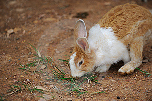 Rabbit Royalty Free Stock Photos - Image: 16036998