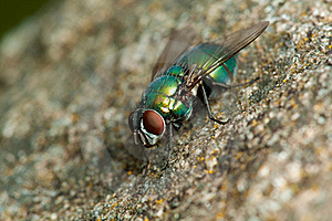 Fly On The Stone Royalty Free Stock Image - Image: 16039246