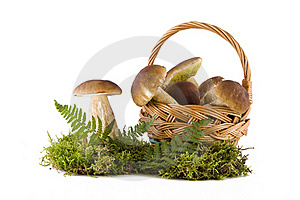 Boletus Mushrooms In And Out The Basket Stock Photography - Image: 16039682