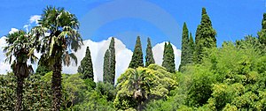 Panorama  Tropical Trees Stock Images - Image: 16041394