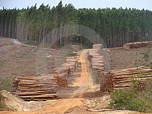 Wood Industry Royalty Free Stock Image - Image: 16042446
