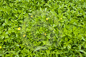 Wild Plant Royalty Free Stock Photography - Image: 16042737