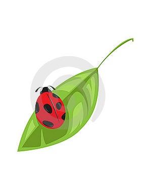 Ladybird On Leaf Royalty Free Stock Photos - Image: 16050788