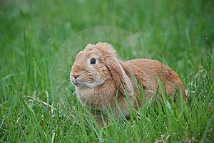 Rabbit Royalty Free Stock Images - Image: 16051199