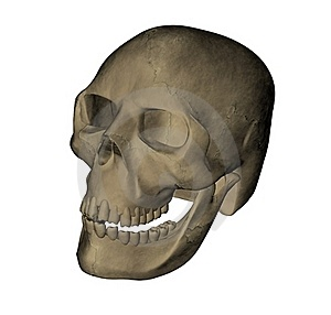Skull Of The People Stock Photo - Image: 16052730