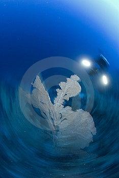Motion Blur Shot Of Scuba Diver Stock Images - Image: 16056284
