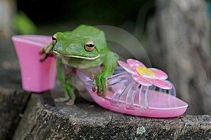 White-lipped Tree Frog Stock Photo - Image: 16061300