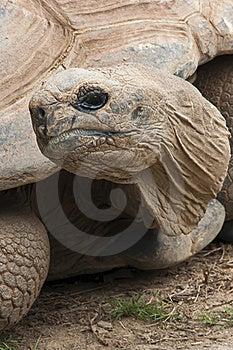 Tortoise Royalty Free Stock Image - Image: 16067066
