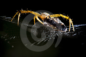 Spider Web Stock Images - Image: 16069324