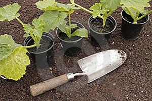 Vegetable Seedlings  Growing Pots Stock Photos - Image: 16069483