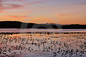 Sunset On Lilly Pad Lake Stock Photography - Image: 16073142