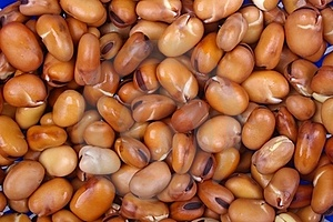 Faba Or Fava Beans Stock Image - Image: 16076361