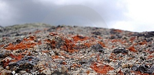 Lichen Stock Photography - Image: 16076672