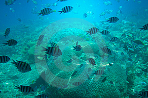 Astonishing Undersea World Of Red Sea. Royalty Free Stock Photography - Image: 16079027
