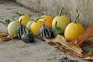 Decorative Pumpkins Stock Images - Image: 16085894