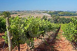 Vineyard On The West Coast Stock Photos - Image: 16086863