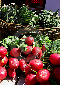 Radishes In The Sunshine Stock Photography - Image: 16088202