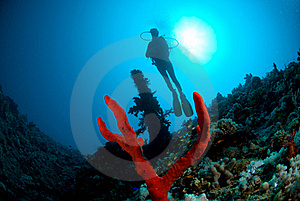 Silhouette Of Female Scuba Diver Stock Images - Image: 16089824