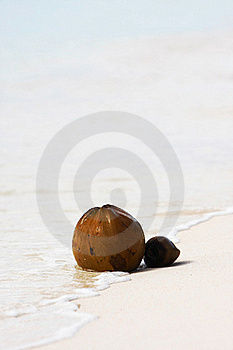 Two Coconuts On Beach Royalty Free Stock Photo - Image: 16092755