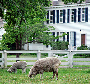 Sheep Grazing Royalty Free Stock Photos - Image: 16093448