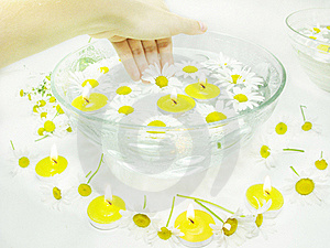 Hand In Plate With Daisy Flowers Royalty Free Stock Photography - Image: 16102867