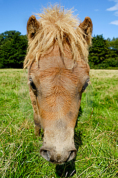 Horse Face Stock Photography - Image: 16147802
