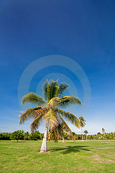 Palm Royalty Free Stock Photos - Image: 16149838