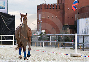 Horse Stock Photography - Image: 16151792
