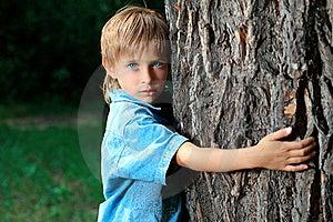 Holding Tree Stock Photos - Image: 16155543