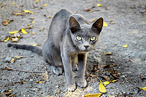 Cat Stock Photos - Image: 16156733