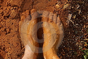 Feed Full Of Red Mud Royalty Free Stock Images - Image: 16164769