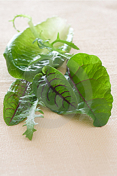 Salad Greens Royalty Free Stock Photography - Image: 16164777
