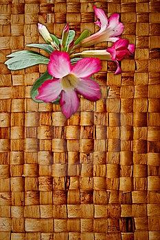 Pink Impala Lily On Hyacinth Hand Weave Stock Photos - Image: 16166613