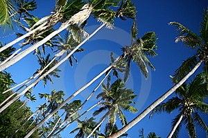 Shady Palms In Fiji Royalty Free Stock Photo - Image: 16174165