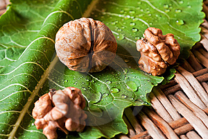 Walnuts Stock Photography - Image: 16174182