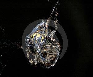 Spider Web Stock Photos - Image: 16179973