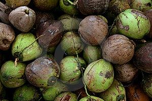 Coconut Pile Stock Image - Image: 16186871
