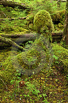 Temperate Rainforest Stock Photography - Image: 16193362