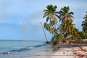 Tropical Beach Stock Images - Image: 16194304