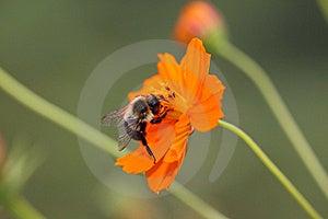 De Fauna Van De Flora Stock Fotografie - Afbeelding: 16196572