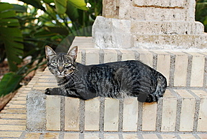 Cat Alley Stare Royalty Free Stock Photography - Image: 16196697
