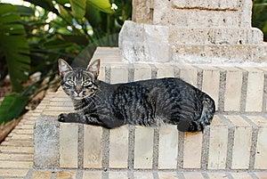 Mirada Fija Del Callejón Del Gato Fotografía de archivo libre de regalías - Imagen: 16196697