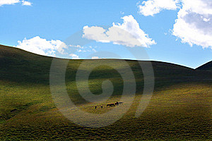 Upland Meadow Royalty Free Stock Image - Image: 16198546