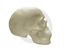 Human Skull Stock Photography - Image: 16203262