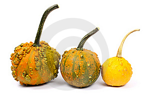 Three Different Pumpkins Stock Photo - Image: 16205910